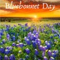 Album Bluebonnet day de Love Noise / Lush Wave Creators, Love Noise, the Mindful / The Mindful