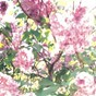 Album The paisley orchard de Actual Water