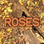 Album Roses - tribute to the chainsmokers de Swift Hits