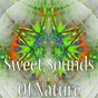 Album Sweet sounds of nature de El Ruido Blanco / White Noise Therapy / White Noise Meditation