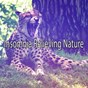 Album Insomnia relieving nature de Sounds of Nature