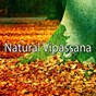 Album Natural vipassana de Zen Meditation & Natural White Noise & New Age Deep Massage