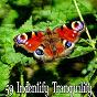 Album 59 indentify tranquility de Meditation