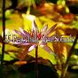 Album 55 peacefully zen sounds de Entspannungsmusik