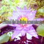Album 44 natural mind meditation accompaniments de Focus Study Music Academy