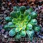 Album 45 tranquil outdoor sounds de Brain Study Music Guys
