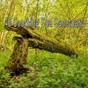 Album 40 soothing spa sanctuary de Sleepy Night Music