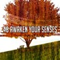 Album 48 awaken your senses de Brain Study Music Guys