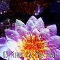 Compilation 63 mind in the pond avec Meditation Zen Master
