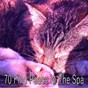 Album 70 find peace in the spa de Rest & Relax Nature Sounds Artists