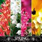 Compilation Spring (the seasons) avec Natobi, Wa Kan / Laurent Dury / Sylvain Poge / Daniel Finot / Yan Shekba Diwely...