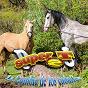 Album La cumbia de los caballos de Grupo Super T